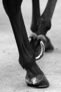 hesteben